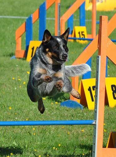 10092011 AG võistlus Pärnus Chahama Blue Moone