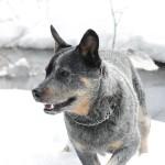 Austraalia karjakoer Karjapeni Fast and Furious talvel