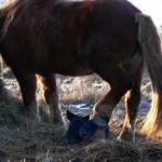 Koerustükk Blue Rock hobusega
