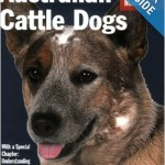 Australian Cattle Dogs Richard Beauchamp